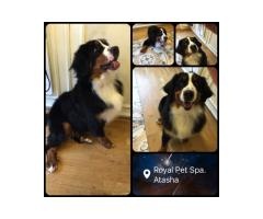 Royal Pet Spa Bucuresti