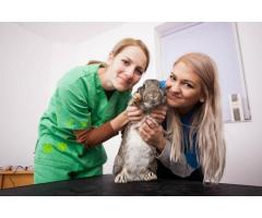Pet Love Cluj