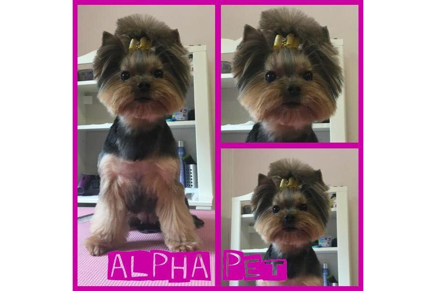 Alpha Pet Bucuresti - 14/18
