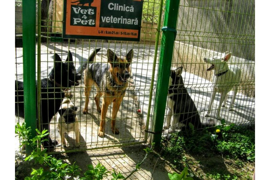 Clinica Vet 4 Pet Bucuresti - 14/18