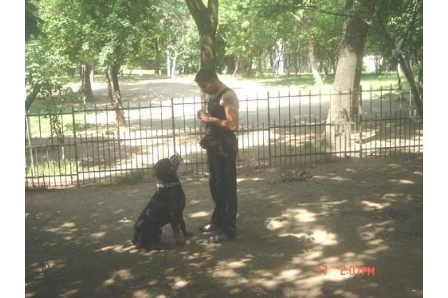 Dog School Bucuresti - 2/12
