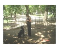 Dog School Bucuresti