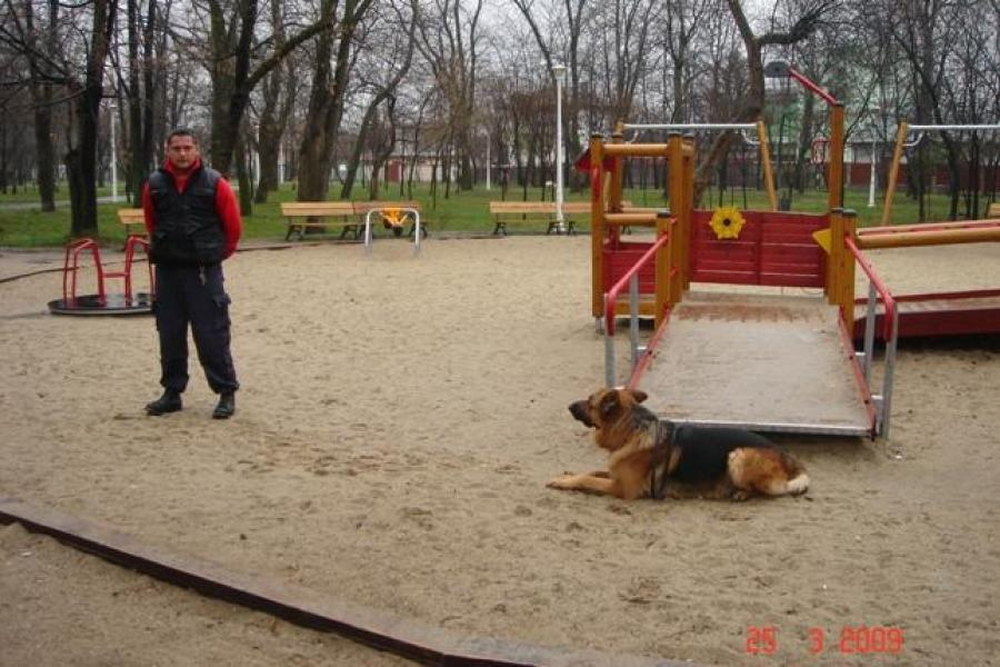 Dog School Bucuresti - 4/12