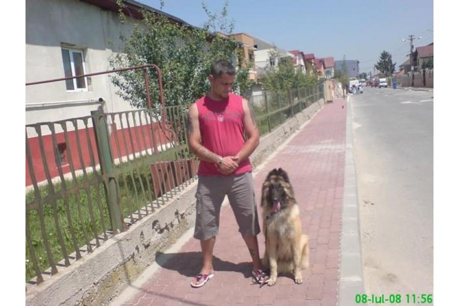 Dog School Bucuresti - 6/12