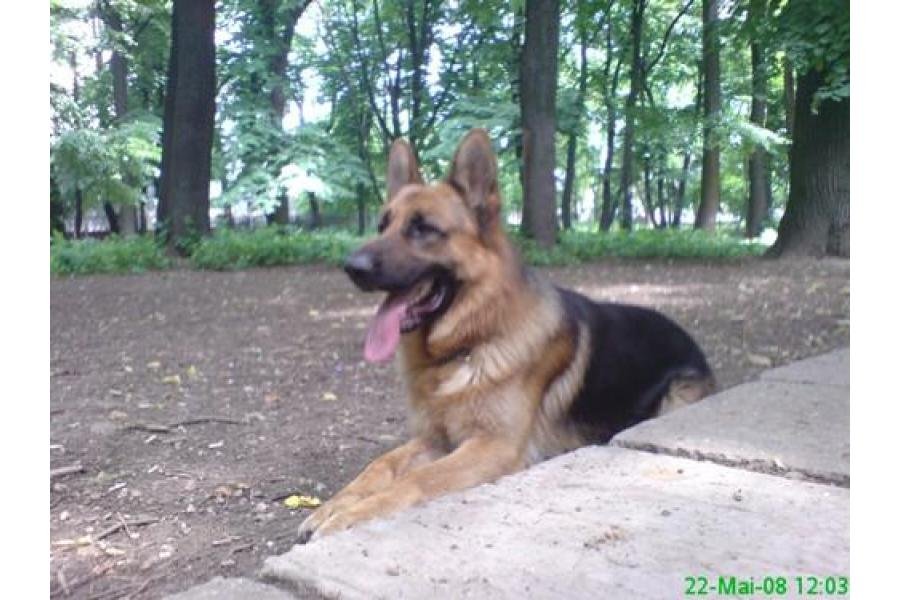 Dog School Bucuresti - 10/12