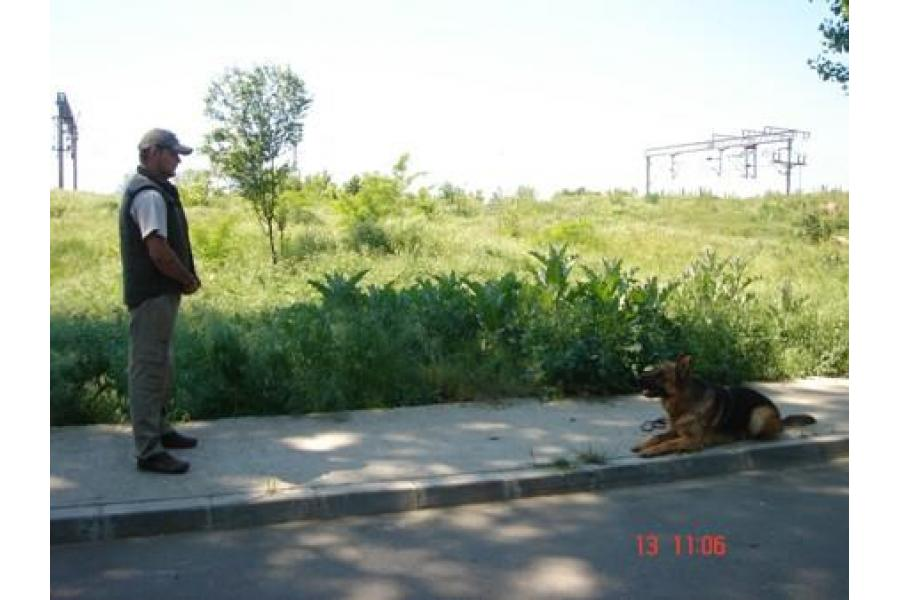 Dog School Bucuresti - 11/12