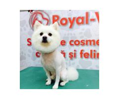 Royal Vet Braila