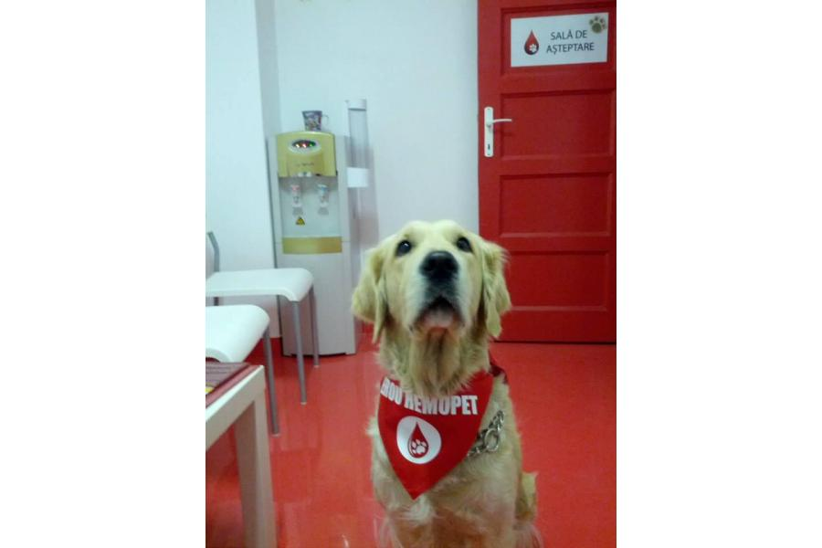 Clinica Veterinara Hemopet - 3/9