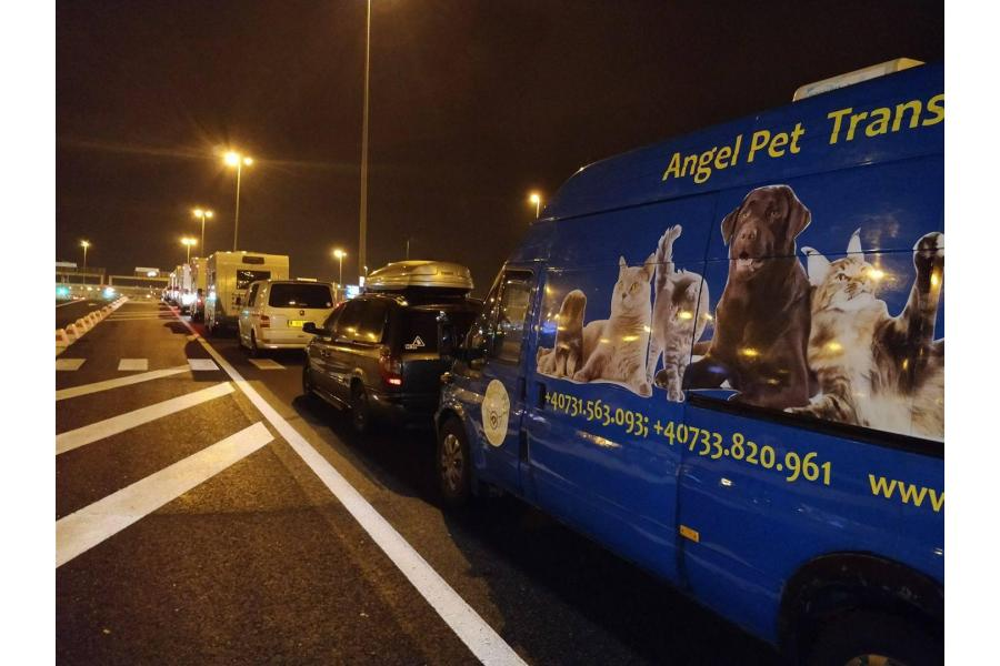 Angel Pet Transport Bucuresti - 10/16