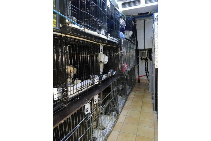 Angel Pet Transport Bucuresti - 13/16