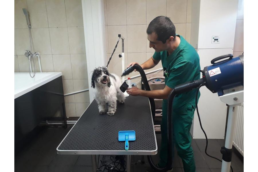 Clinica SuperVet Chitila - 4/11