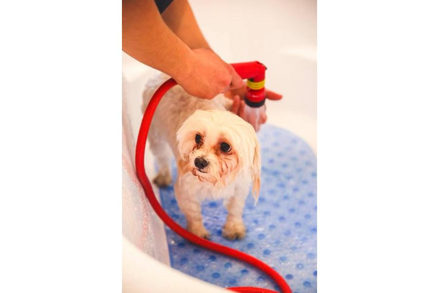 Pet Point Salon Canin & Pet Shop - 8/30